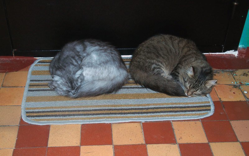 cats1rr.jpg.a02387fe0aba5434862cd0a2011043fb.jpg